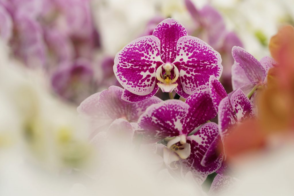 Hark Orchideen - Genetik Pool